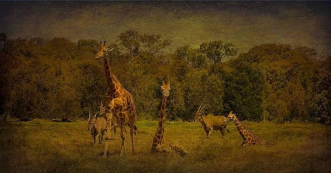 Shari Mattox - Out Of Africa