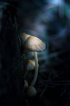 Out Of The Dark by Paul Barson