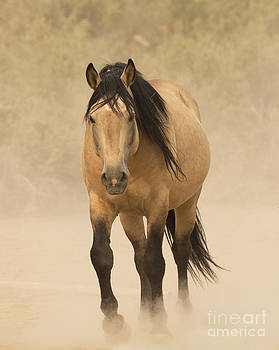 Out of the Dust by Carol Walker