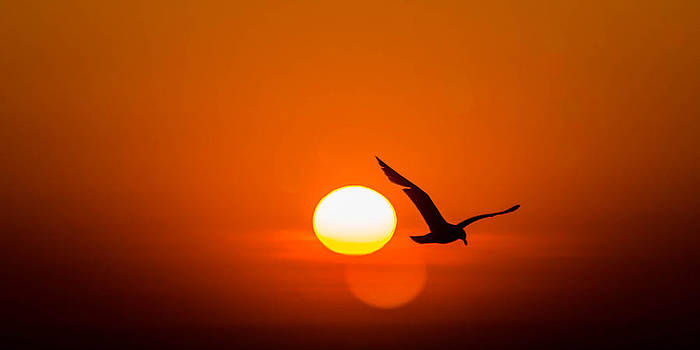 Out of the Sunrise by Todd Heckert