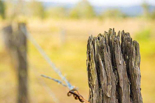 Peter Lombard - Outback Fence Post