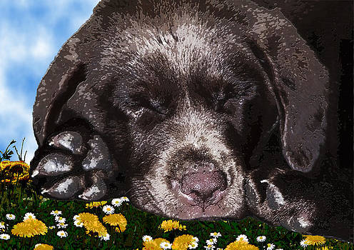 Outside Portrait of a Chocolate Lab Puppy  by Chris Goulette