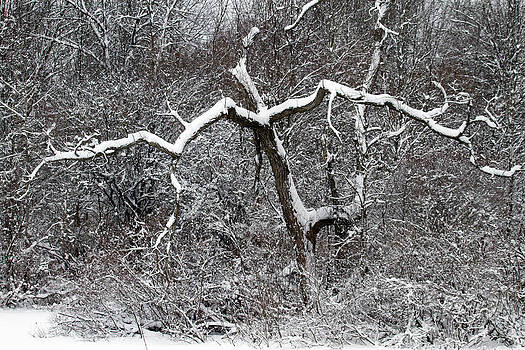 Outstretched Limbs by Kevin Snider