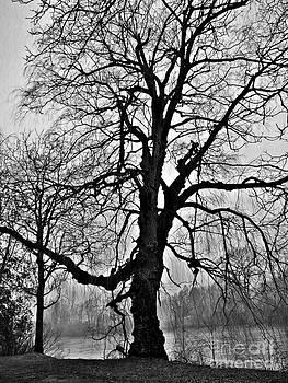 Overcast by Chris Sotiriadis