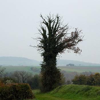 Marc Philippe Joly - Overgreen tree