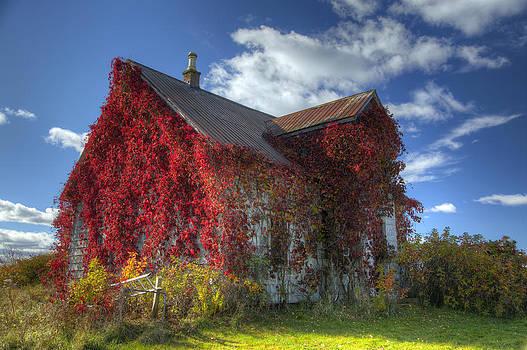 Overgrown  by Allan MacDonald