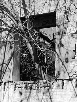 Overgrown by Tara Miller