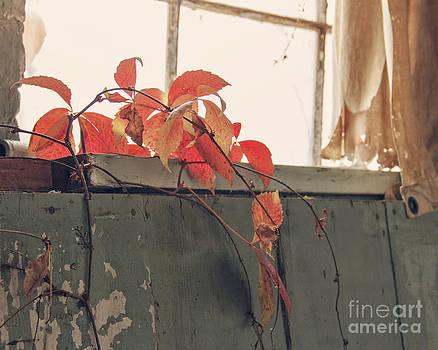 Overgrowth by Jillian Audrey Photography