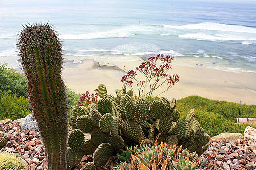 Overlooking San Elijo Beach by Ann Patterson