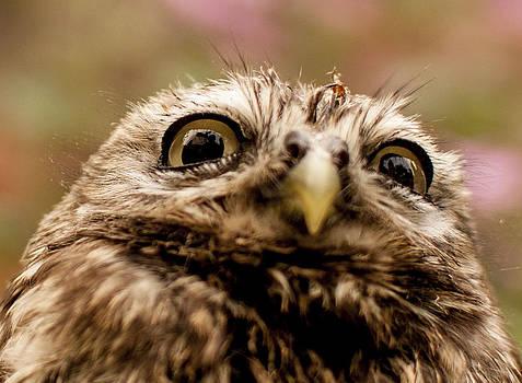 Owl 3 by Glenn Hewitt
