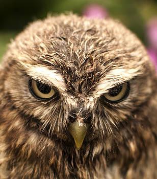 Owl 4 by Glenn Hewitt