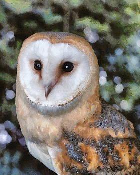 Paul Gulliver - Owl - Bright Eyes 2