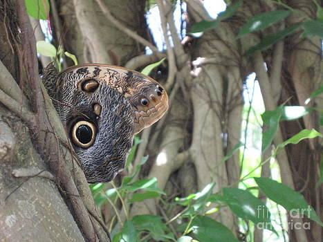 Owl Butterfly in Hiding by HEVi FineArt
