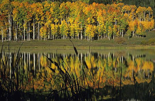 Susan Rovira - Owl Creek Pass Fall 2