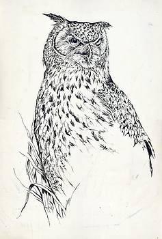 Alfred Ng - owl drawing