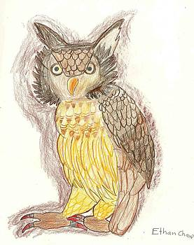 Wise Owl by Ethan Chaupiz