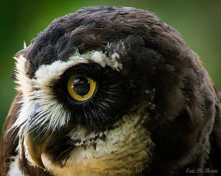 Owl Eye by Eric Bean