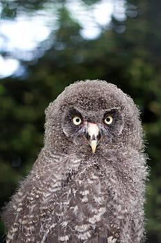 Fizzy Image - owl