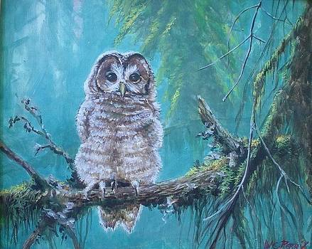 Owl in the woods by Perrys Fine Art