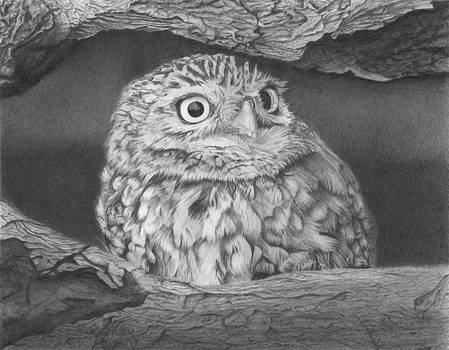 Owl in Tree by Sandra Weiner