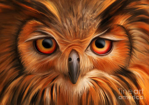 Owl by Ivan  Pawluk