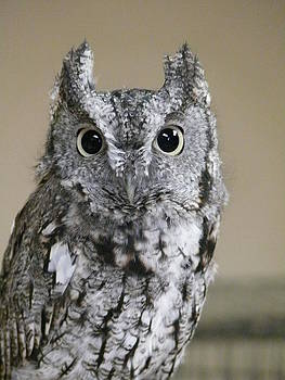 Owl by Jacob Beck