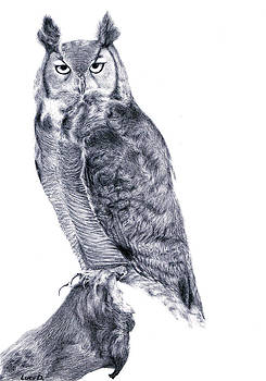 Owl by Lucy D