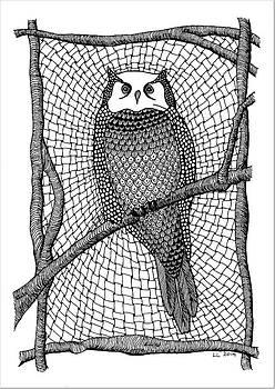 Owl on branch by Lissi Lyngsoe