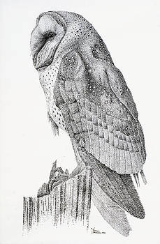 Sam Davis Johnson - Owl