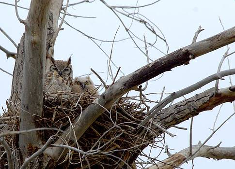 Owl snuggle  by Rebecca Adams