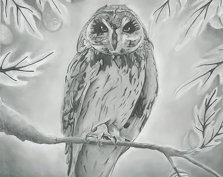 Owl2 by Raquel Ventura