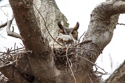 Owlet and Mom by Jill Bell