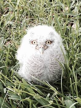 Owlet by Melanie Wadman