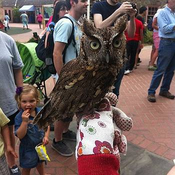 Owlet by Nathan Jordan