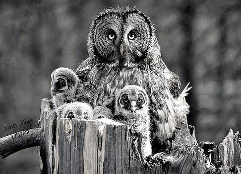 Owls by Janet Moss