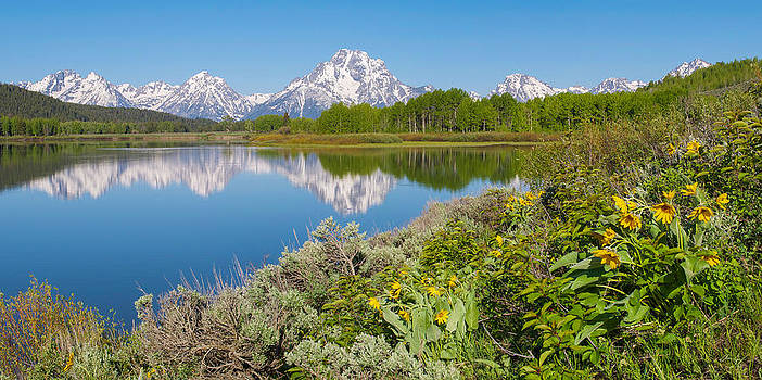 Oxbow Bend Wildflowers in Spring by Aaron Spong
