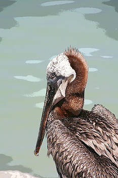P is for Pelican by Bob and Jan Shriner