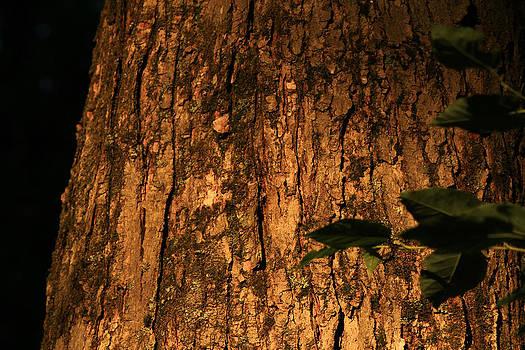 PA bark by Jim Cotton