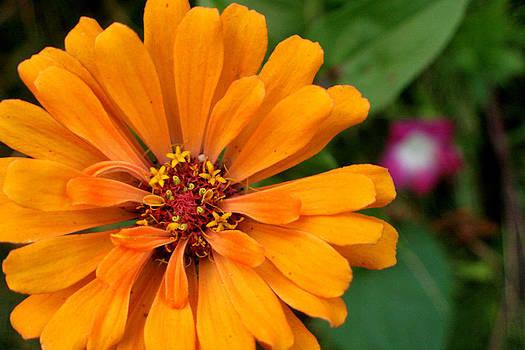 Pac-Man as a Flower by Artist Orange