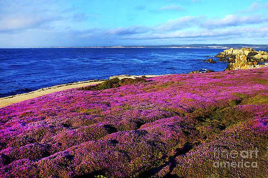 Pacific Grove California Coast by Howard Koby