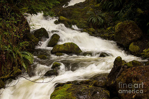 Pacific Northwest Waterfall by Deanna Proffitt