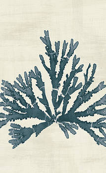Pacific Sea Mosses Iv No Map Crop by Wild Apple Portfolio