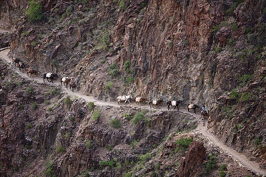 Pack train in the Schist by Tom Brownold