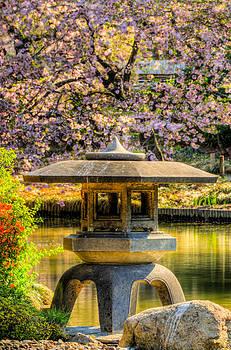 David Hahn - Pagoda and the Yoshino Cherry Tree