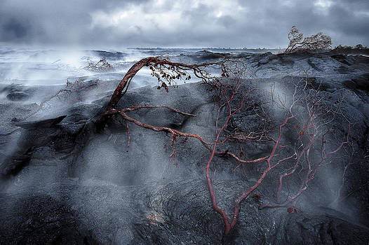 Pahoa by Hawaii  Fine Art Photography