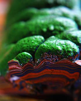Scott Hovind - Paint Booth Geology 8