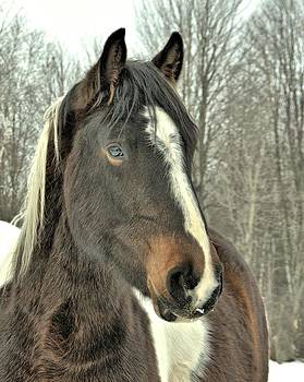 Valerie Kirkwood - Paint Horse In Winter