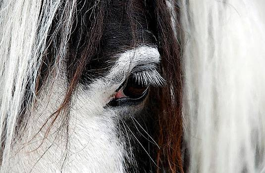 Paint Horse Portrait by Olde Time  Mercantile