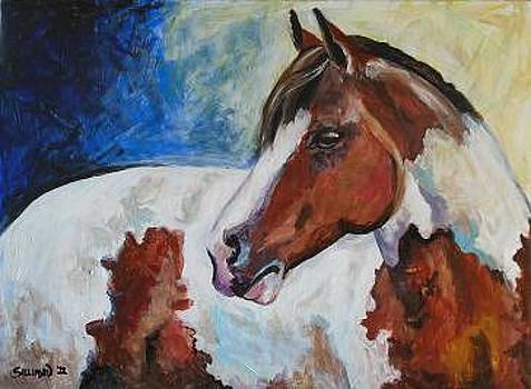 Paint Horse by Veronica Silliman