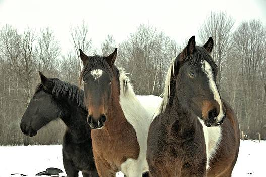 Valerie Kirkwood - Paint Horses in the Snow 1